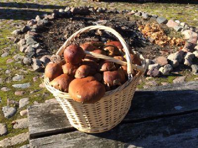 im Herbst Pilze sammeln
