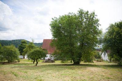 06 Riesiger Obstgarten