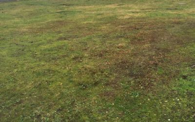 Unbebautes Grundstück und Nebengebäude (Hundezwinger) in 45770 Marl, Sinsen