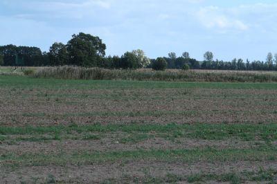 Luckau Bauernhöfe, Landwirtschaft, Luckau Forstwirtschaft