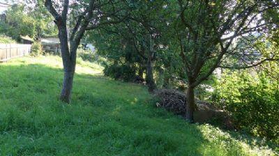 oberer Grundstücktsteil mit altem Obstbaumbestand