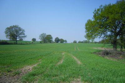 Neumünster Bauernhöfe, Landwirtschaft, Neumünster Forstwirtschaft