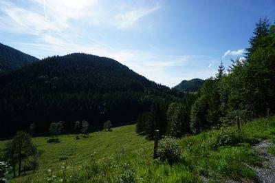 Weißenbach an der Enns Bauernhöfe, Landwirtschaft, Weißenbach an der Enns Forstwirtschaft