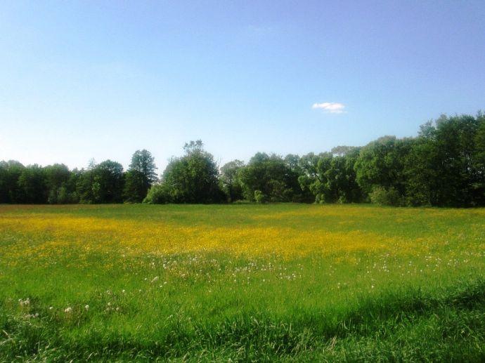 Priesendorf: Das Tor zum Steigerwald ca.12 km nach Bamberg, Eckgrundstück fast eben. Erschließung ist für Frühjahr - Sommer 2019 geplant.