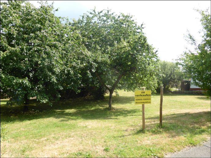 Sonniges Grundstück (Nähe Montabaur)