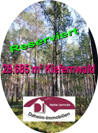 29.685 m² Kiefernwald im Spreewald (150 bis 200 Jahre)