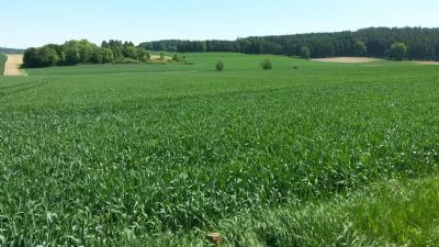 Kelheim Bauernhöfe, Landwirtschaft, Kelheim Forstwirtschaft