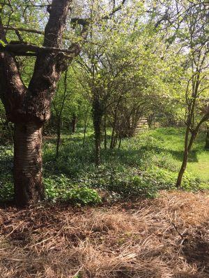 alter Baumbestand auf dem Grundstück