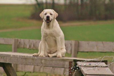 Traumhafte Ferienhäuser für Hundebesitzer - eingezäunte Gärten zur Alleinnutzung, Ortsrandlage, gute Laufmöglichkeiten