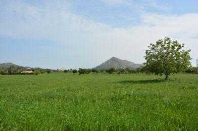 Alcudia Bauernhöfe, Landwirtschaft, Alcudia Forstwirtschaft