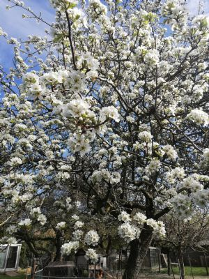 Schöner Obstbaumbestand auf herrlichem Grundstück