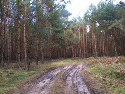 Waldweg II