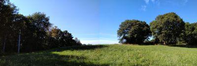grüner Abstand - Ihre eigene Waldparzelle