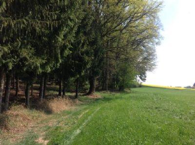 Geisenhausen Bauernhöfe, Landwirtschaft, Geisenhausen Forstwirtschaft