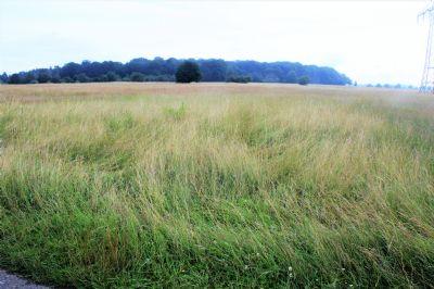 Orenhofen Bauernhöfe, Landwirtschaft, Orenhofen Forstwirtschaft