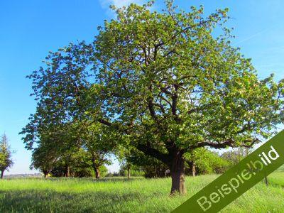 Obststreuwiese bei Bad Sooden-Allendorf