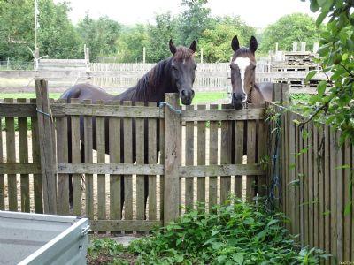Viel Platz für die Pferde