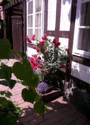 Garten Impressionnen
