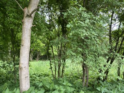 Hainsfarth Grundstücke, Hainsfarth Grundstück kaufen