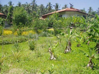 Koh Samui Häuser, Koh Samui Haus kaufen