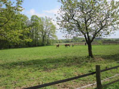Ansicht Pferdewiese