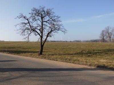 Grünlandfläche bei Herrnhut