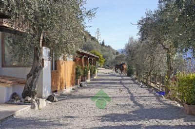 Toscolano Maderno Bauernhöfe, Landwirtschaft, Toscolano Maderno Forstwirtschaft