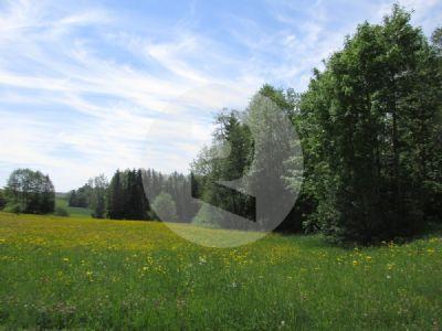 Aschach an der Donau Bauernhöfe, Landwirtschaft, Aschach an der Donau Forstwirtschaft