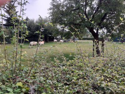 2 Grundstücke im Dorfkern