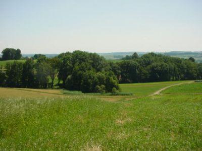 Kirchberg Bauernhöfe, Landwirtschaft, Kirchberg Forstwirtschaft
