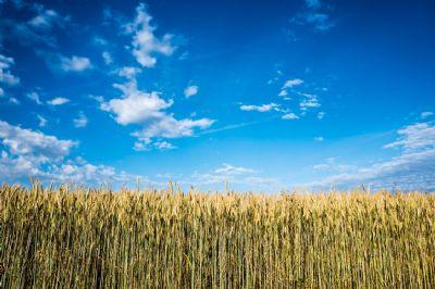Landwirtschaftliche Fläche, ein idealer Einstiegszeitpunkt von Euro zum Grund und Boden!