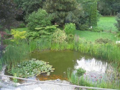 Rund um den Teich