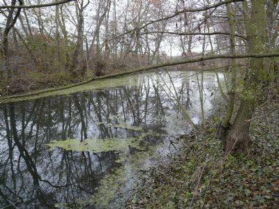 Hohenkirchen Grundstücke, Hohenkirchen Grundstück kaufen