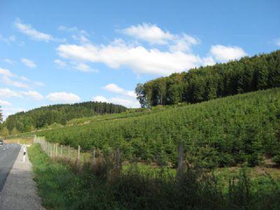Lennestadt Bauernhöfe, Landwirtschaft, Lennestadt Forstwirtschaft