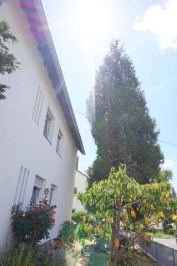 Schöne & helle Wohnung vor den Toren des Rheingaus