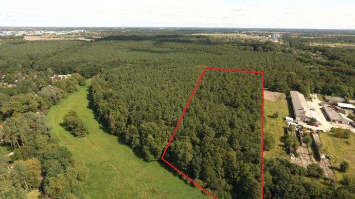 PREISUPDATE! - Waldgrundstück im Erpetal mit einer Größe von 20.083 m²
