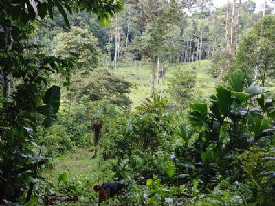 Bocas del Toro Grundstücke, Bocas del Toro Grundstück kaufen