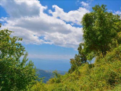 Volos/Pilion Bauernhöfe, Landwirtschaft, Volos/Pilion Forstwirtschaft