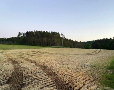 Spalt Bauernhöfe, Landwirtschaft, Spalt Forstwirtschaft