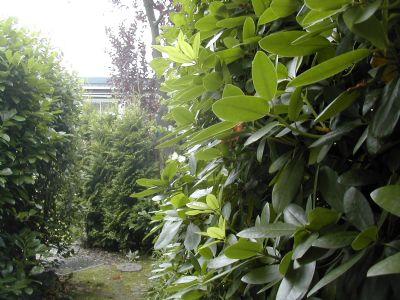 Blick über das Gartentor