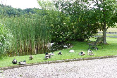 Idylle für Enten