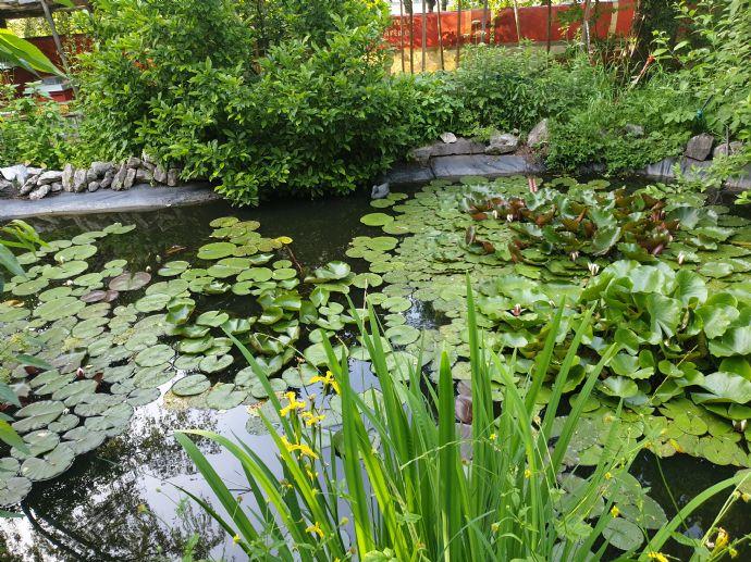 Gartengrundstück mit Teich und Sauna