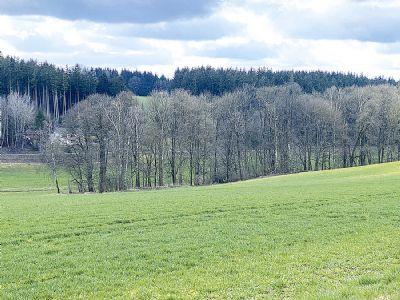 1,9 ha Waldfläche