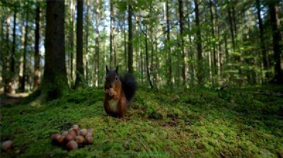 Wald in Höhenlage von Radebeul