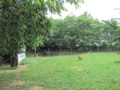 Gärtnerei, Grünfläche, Baumschlue, Freizeitgrundstück