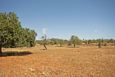 S´Alqueria Blanca Grundstücke, S´Alqueria Blanca Grundstück kaufen