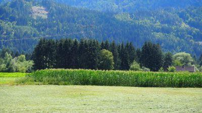 Lienz Bauernhöfe, Landwirtschaft, Lienz Forstwirtschaft