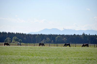 Blick über eine Pferdekoppel auf die Berge