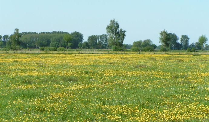 Wir suchen!!!!! Wiesen-, Landwirtschaftliches Grundstück, Donau-Ries Kreis