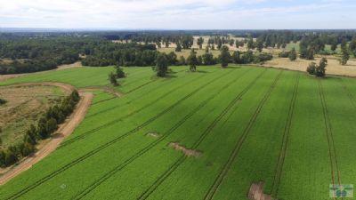 Purranque Bauernhöfe, Landwirtschaft, Purranque Forstwirtschaft